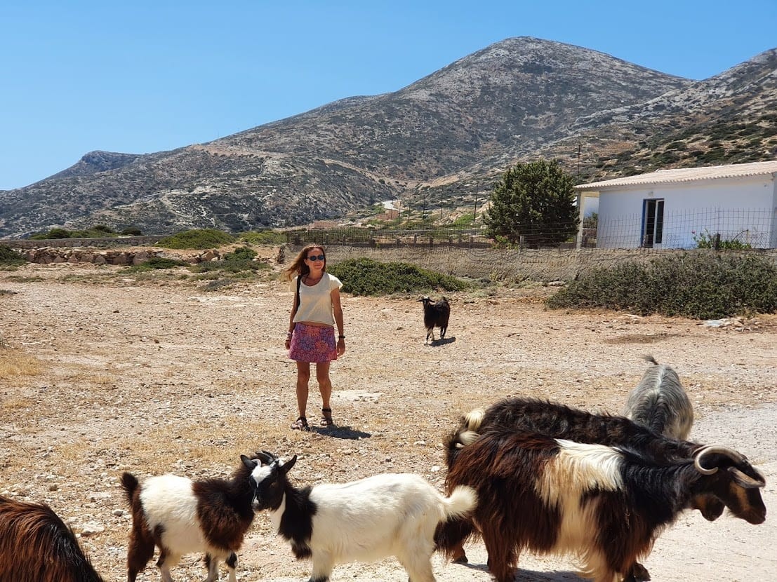 There are lots of goats on Donoussa island