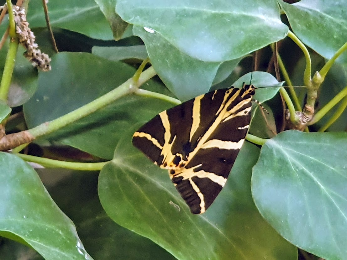Visiting the Valley of the Butterflies in Paros